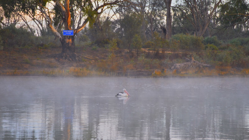 Fog at the sandbar