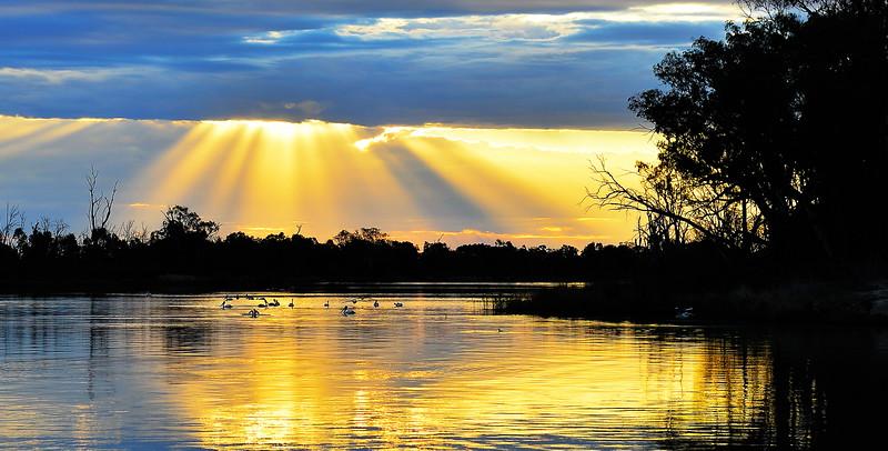 Sunset at the sandbar with swans