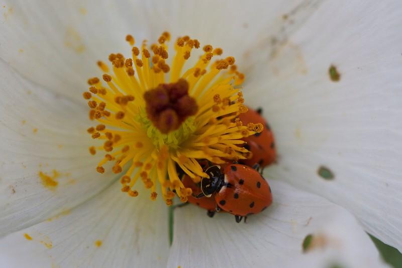 Category C06 Beetles