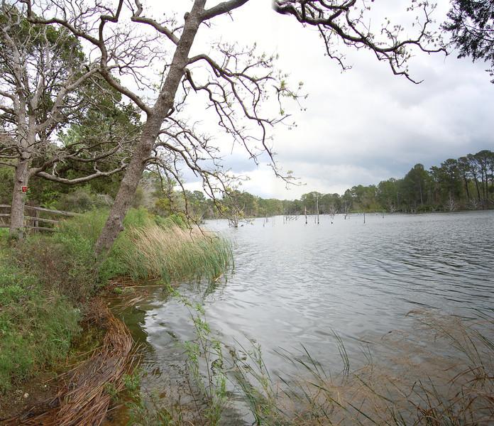 Boy Scout shoreline looking toward sunken trees.
