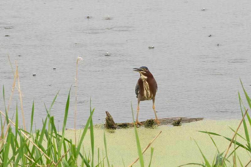 Bird Pond Rain_-5