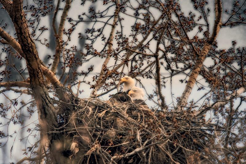 Eagle Nest D Paint