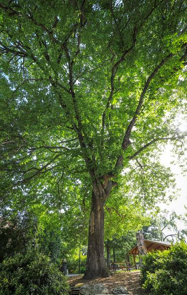 Norcross Tree Tour