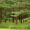 100 Acre Farm, Norfolk Island