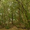 Forest on Norfolk Island