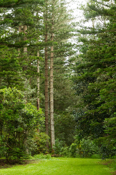 100 Acre Farm hiking trails, Norfolk Island