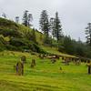 Historic cemetery on Norfolk Island
