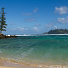 Lone Pine at Emily Bay, Norfolk Island