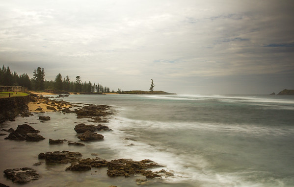 Lone Pine, Norfolk Island