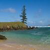 Lone Pine at Emily Bay, Norfolk Island