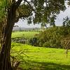Farms on Norfolk Island