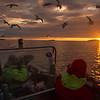 Solnedgang fra båden