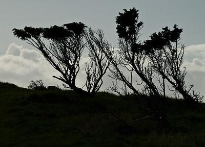 Foto: Ståle