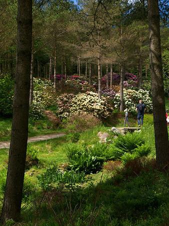 Fra Rogaland Arboré ved Sviland (Foto: Geir)