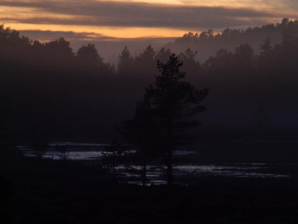 (Foto: Ståle) B2014