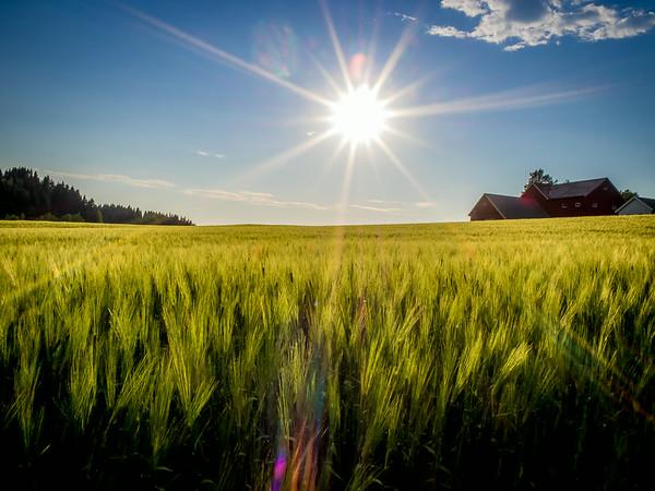 Soldans - Sparbu i Steinkjer. Foto: Geir