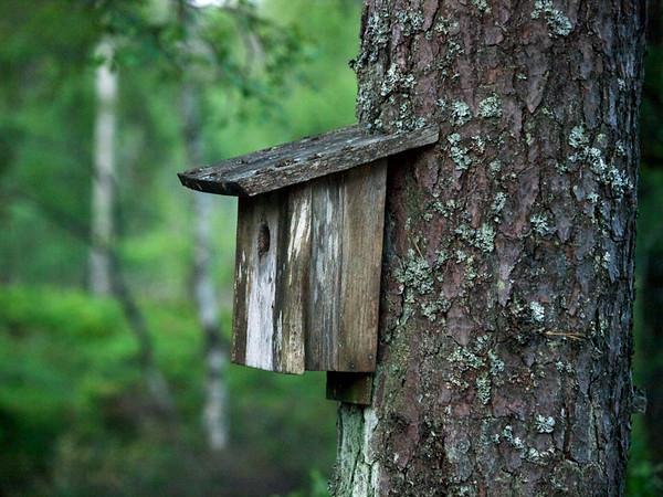 Fuglebur i skog