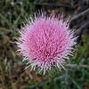 Pink Unusual Flower