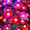 Psychadelic Flower Power