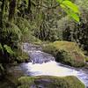 Cosya Rica Rain Forest 2006