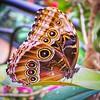Butterfly in Costa Rica Rainforest