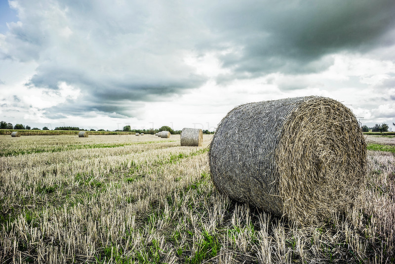 Hay Bales in Normandie