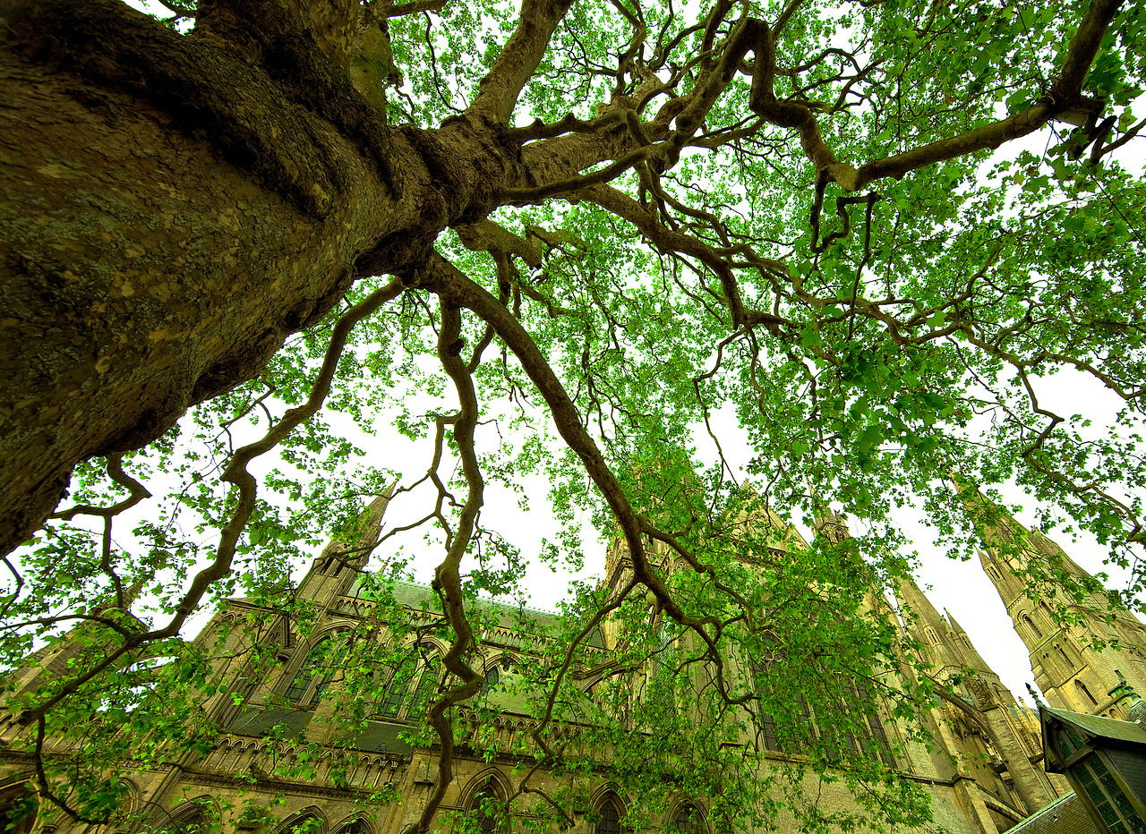 Bayeux also has a beautiful 1000-year-old cathedral, and a giant Sycamore tree in the courtyard.