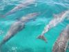 Sorte! Em pleno porto, golfinhos!