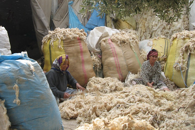 Cleaning and thrashing the wool by hand with a stick
