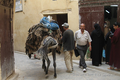 Mules are used to deliver hides to the tannery in the Fez medina