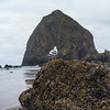 Cannon Beachs Haystack Rock