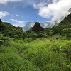Lush hiking trail in Maui rainforest