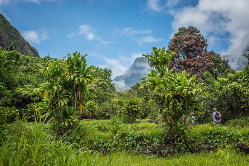 Lush hiking trail in Maui rainforest