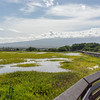 A birdwatcher's oasis, the Kealia Pond National Wildlife Refuge harbors native waterbirds year-round and hosts migratory ducks and shorebirds from October to April. In the rainy winter months Kealia Pond swells to more than 400 acres, making it one of the largest natural ponds in Hawaii. In summer it shrinks to half the size, giving it a skirt of crystalline salt (Kealia means 'salt-encrusted place').<br /> You can view the pond from the coastal boardwalk on N Kihei Rd, as well as from the refuge's visitor center off Mokulele Hwy at the 6-mile marker. In both places, you're almost certain to spot wading Hawaiian black-necked stilts, Hawaiian coots and black-crowned night herons – all native water birds that thrive in this sanctuary. The visitor center occupies an abandoned catfish farm with footpaths atop the levees that separate the old fishponds, a layout that allows you to get very close to the birds, and this is also the best place to see wintering osprey, a majestic fish hawk that dive-bombs for its prey in the fishponds.