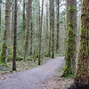 A wooded trail in Campbell Valley Regional Park, Metro Vancouver