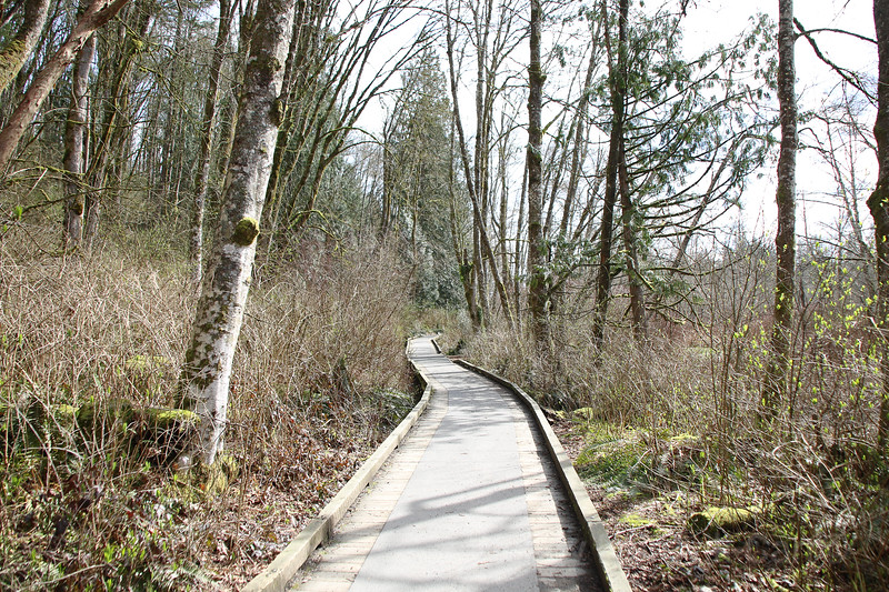 A wooden walkway in the marshy woodlands of a west coast forest