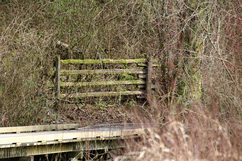 Wooden walkway in the marshy woodlands of a west coast forest
