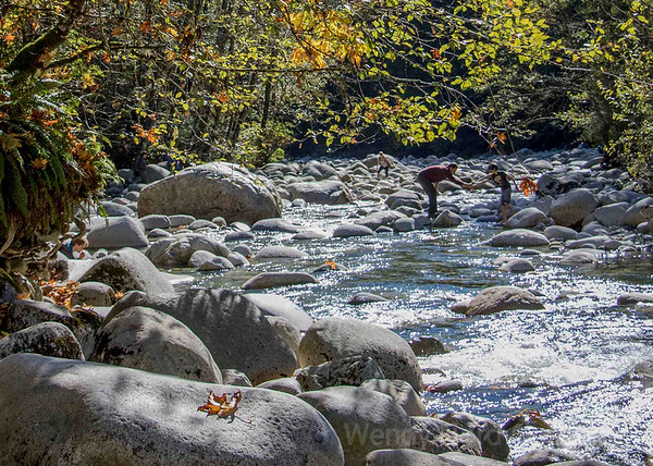 Explore Lynn Valley Canyon