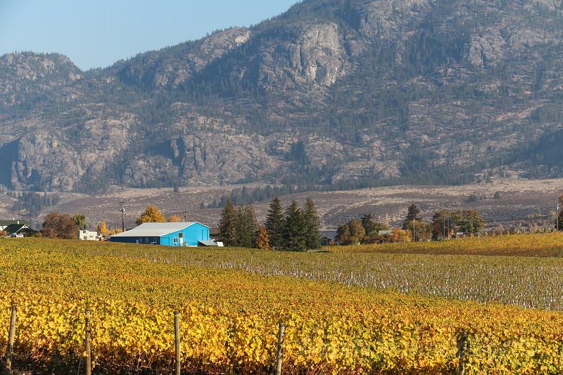 Vinyeards grow in the lower Okanagan valley near Osoyoos.