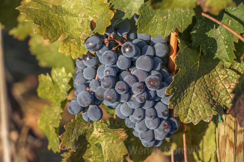 Estate Winery, Osoyoos, Okanagan