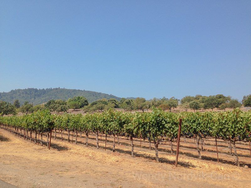 Travel to the beautiful Napa Wine Valley