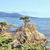 The Lone Cypress on the scenic 17-Mile-Drive, California