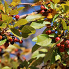 Berry tree - Utah's most scenic route from Moab to Bryce Canyon