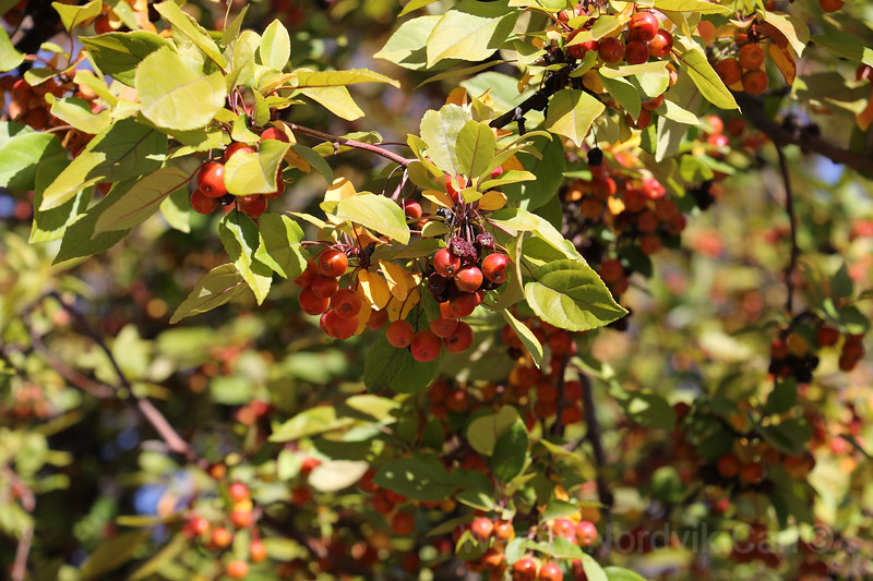 Berry Tree -Utah's most scenic route from Moab to Bryce Canyon