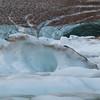 Path of the Glacier Trail<br /> Icebergs galore.