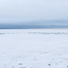 Some scenics to show the extent of the ice today as we continue our quest for bears.