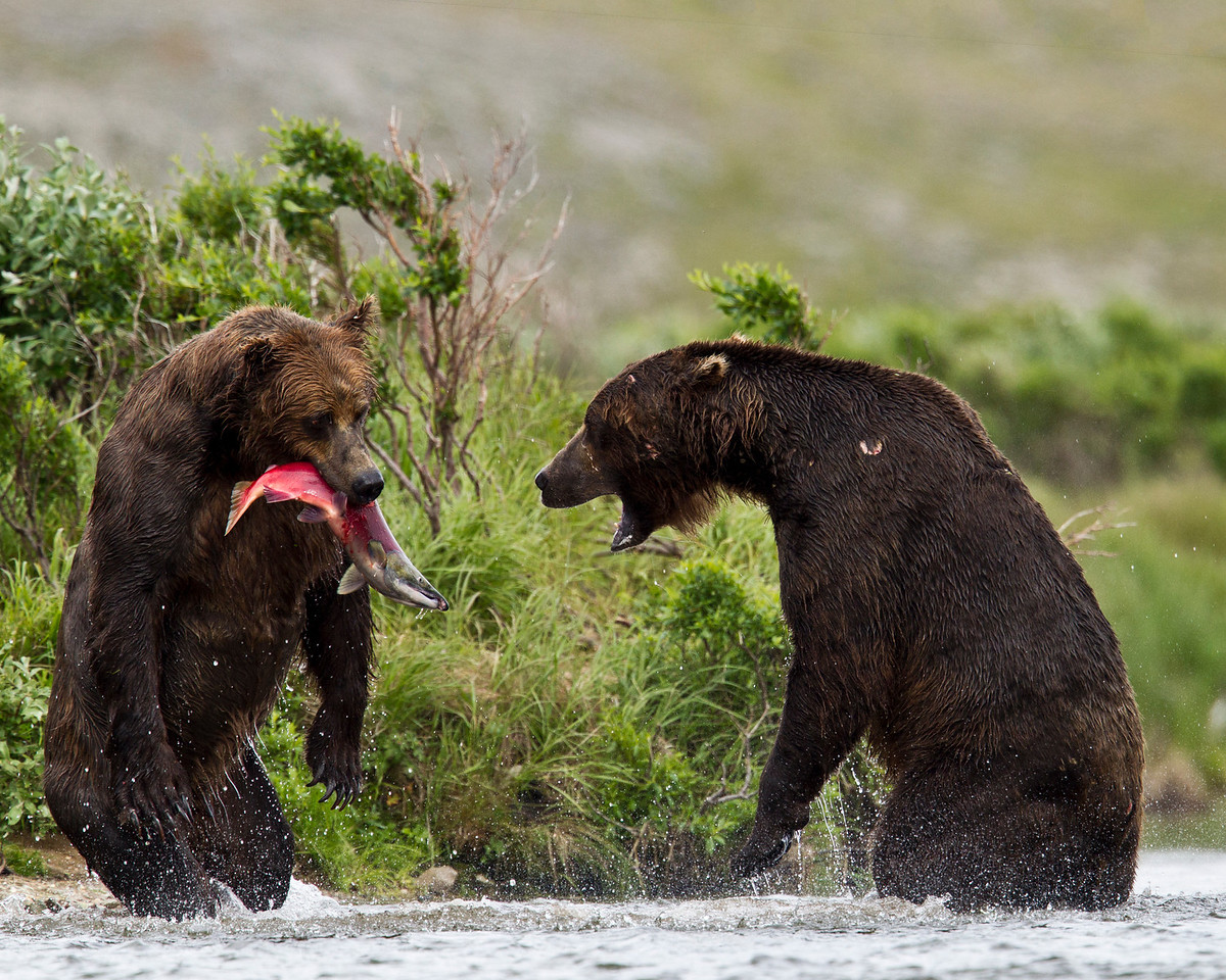 """""""Hey are you going to eat all that yourself?""""  Sometimes they disagree over who gets the fish."""