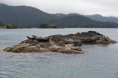 And of course all the usually gang were there to see.  Seals on the rocks