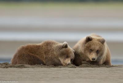 Crimp Ear's Cubs