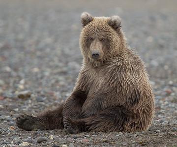 Pavlov's cub